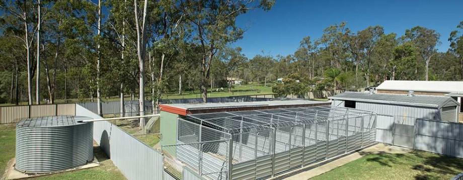 In Kennel Dog Training Brisbane