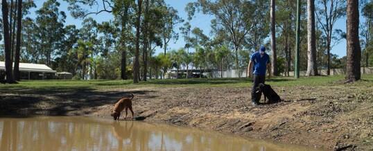 Is using an Off-Leash Dog Park for Socialisation a good Idea?